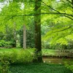 Arboretum des Prés des Culands, Meung sur Loire, 2011